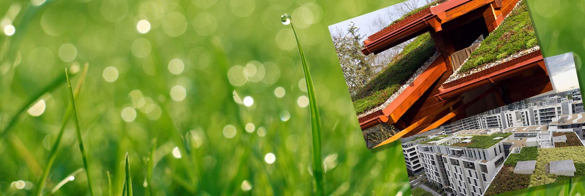Green roofs slide