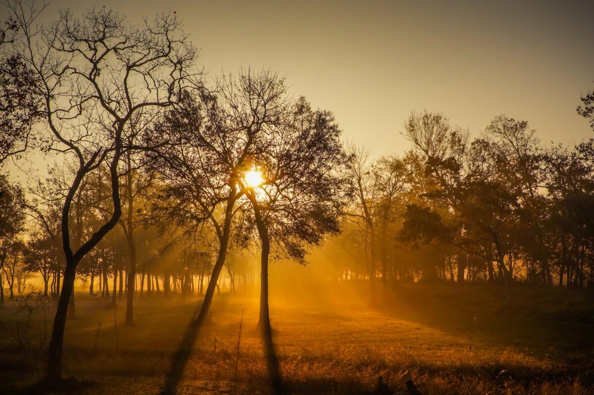 Stromy Brna: Věděli jste, že dostávají speciální injektáž a že je můžete chodit zalévat?