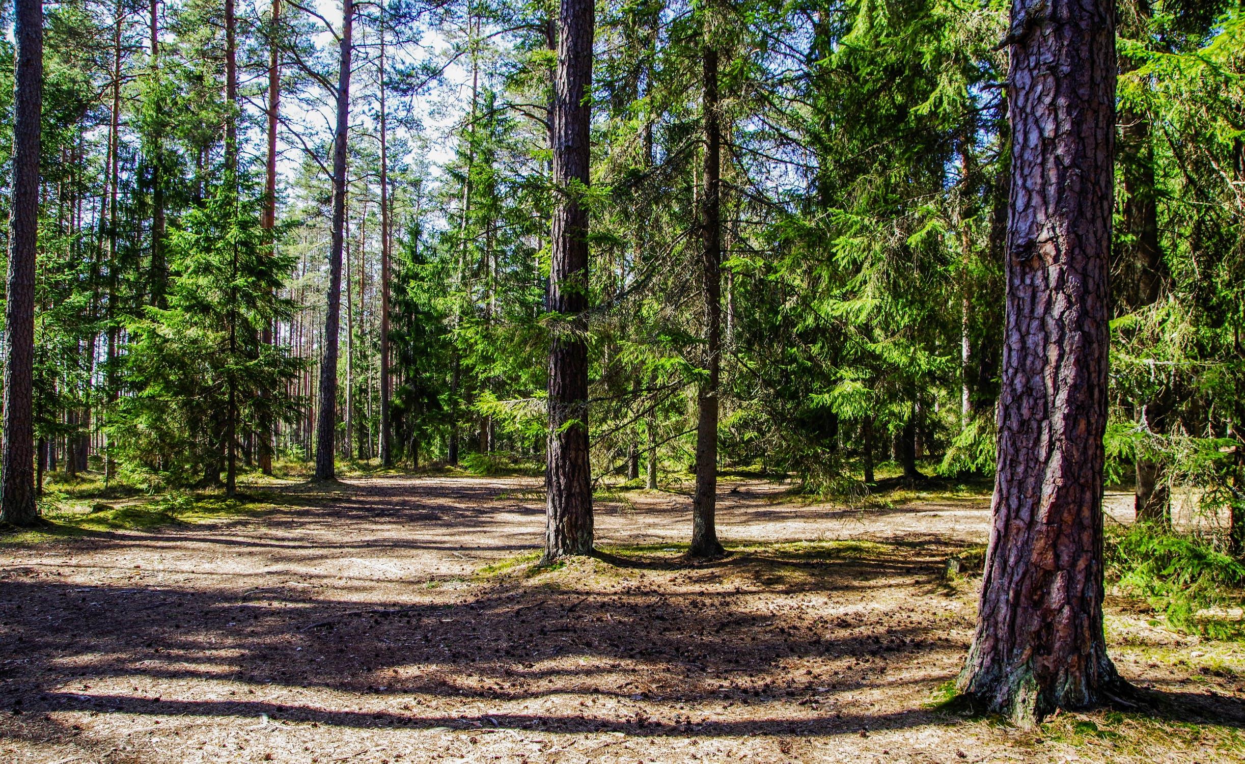 Zapojte se do obnovy českých lesů v lokalitě Babího lomu se společností BAUHAUS!