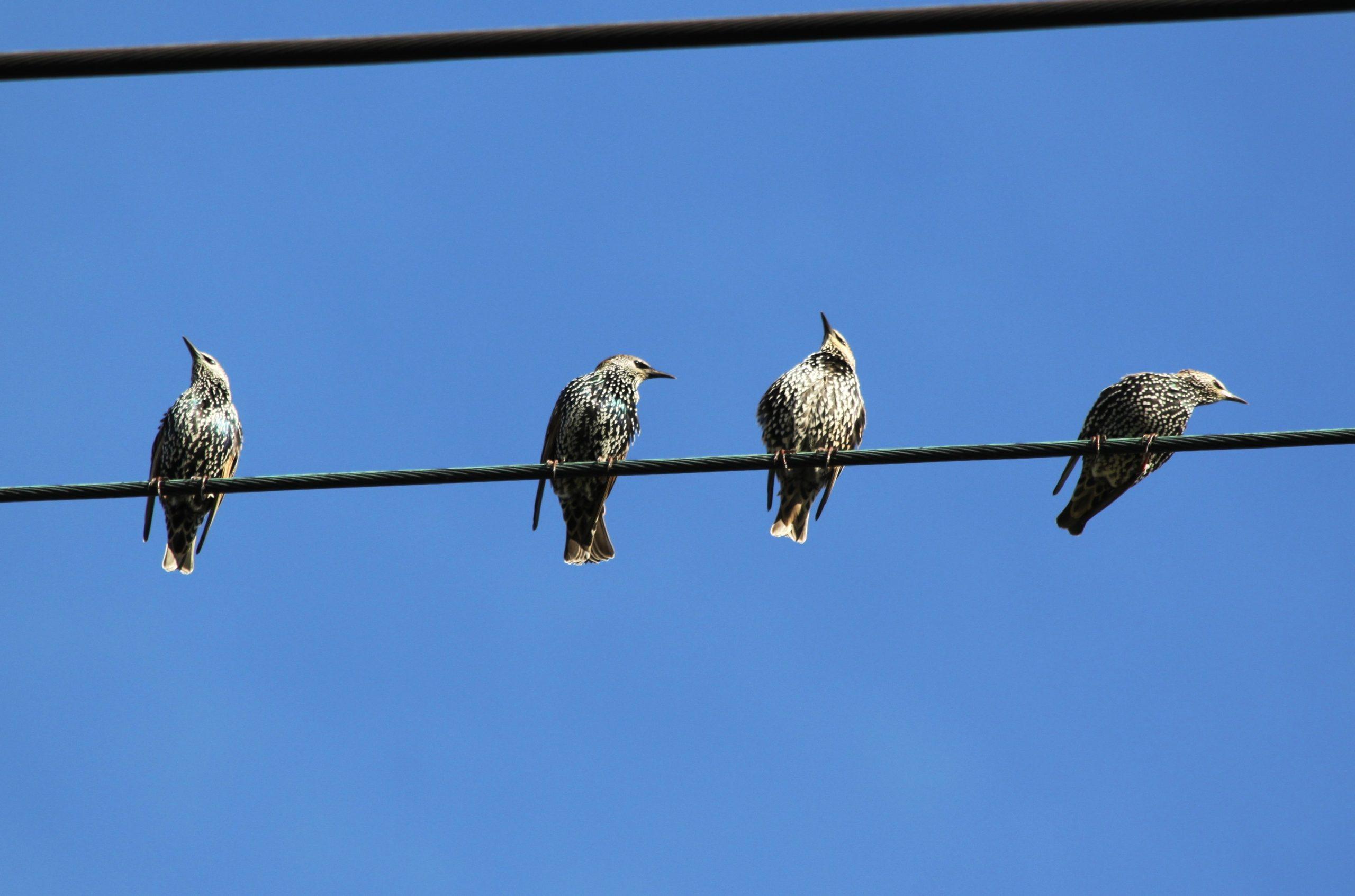 """Přednáška """"Ptáci a voda ve městě"""" přiblíží důležitost vodních zdrojů pro přežití ptactva v městském prostředí"""